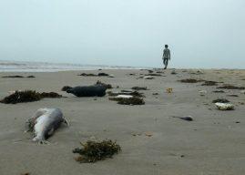 Phát hiện cá chết hàng loạt dọc bờ biển Đà Nẵng