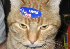 There's no such thing as mailed-in voting fraud say the Dems, Dead Cat Receives Voter Registration Form by Mail